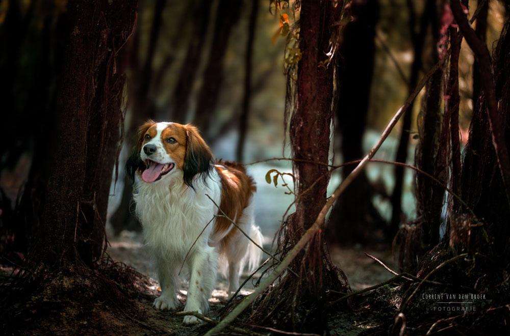 Hundefotografie Mainz