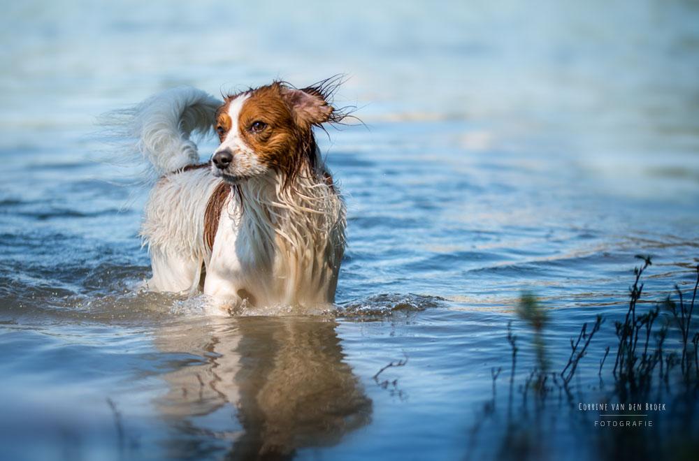 Fotoshoot mit deinem Hund, Mainz