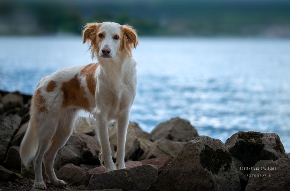 Hundeportrait machen lassen