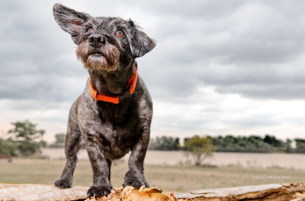 Hundefotograf Mainz