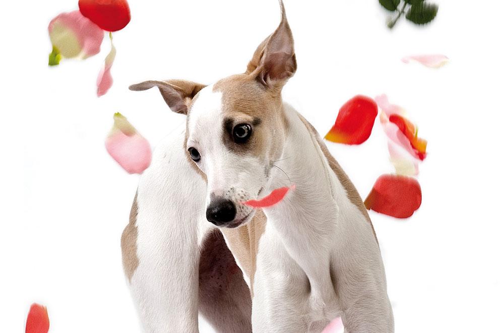 Hundefotohgrafie, Hundeporträts