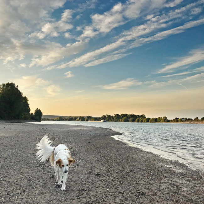 Sonnenuntergnag am Hundestrand