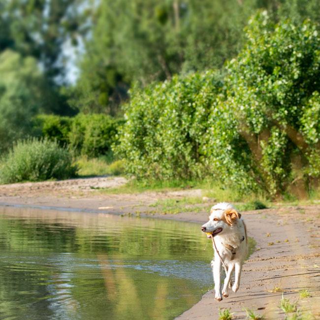 Strandbucht am Rhein mit Hund