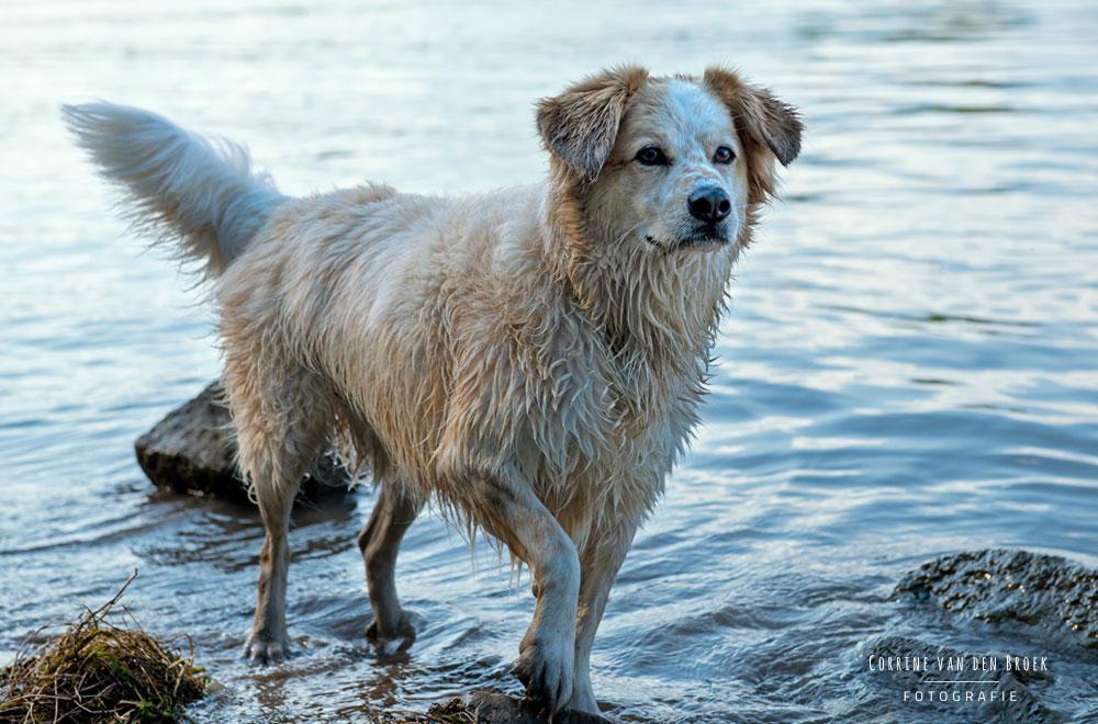 Fotoshooting mit deinem Hund